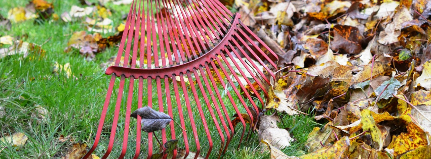 rake leaves fall