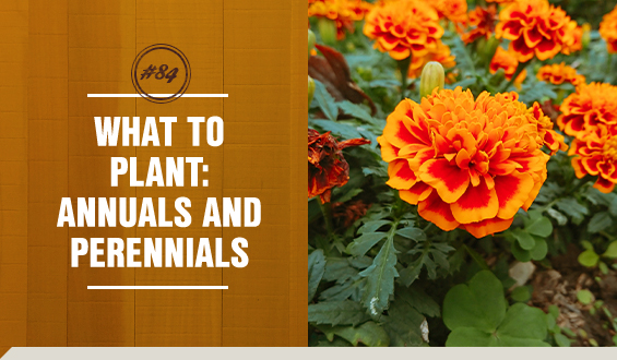 Annual and perennial flowers